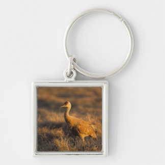 sandhill crane, Grus canadensis, in the 1002 2 Silver-Colored Square Key Ring