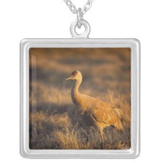 sandhill crane, Grus canadensis, in the 1002 2 Silver Plated Necklace