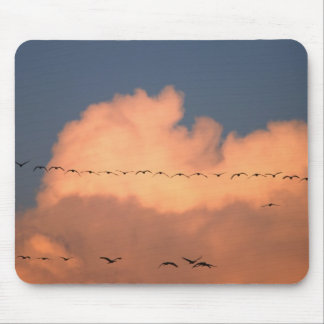 Sandhill Crane Grus canadensis) in twilight Mouse Pads