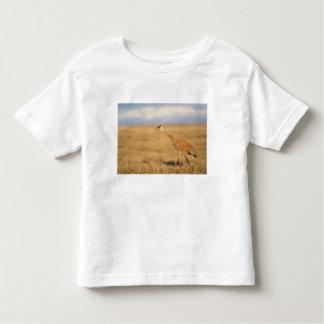 sandhill crane, Grus canadensis, walking in the Toddler T-Shirt