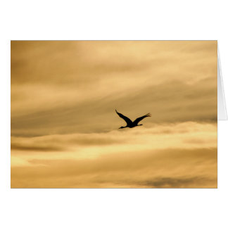 Sandhill Crane in New Mexico Greeting Card