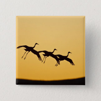 Sandhill Crane landing at sunset 15 Cm Square Badge