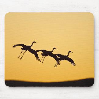 Sandhill Crane landing at sunset Mouse Mat