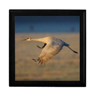 sandhill crane large square gift box