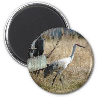 Sandhill Crane Magnet