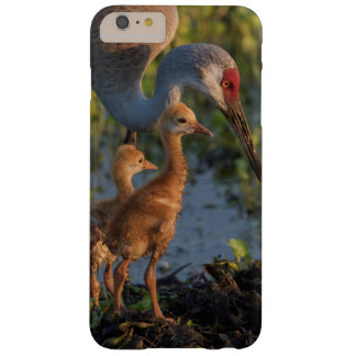 Sandhill crane with chicks, Florida Barely There iPhone 6 Plus Case