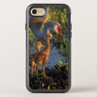 Sandhill crane with chicks, Florida OtterBox Symmetry iPhone 8/7 Case