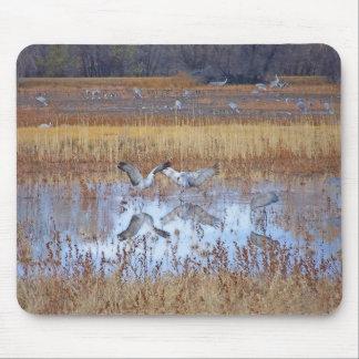 Sandhill Cranes Dancing Mousepad