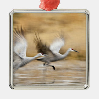 Sandhill Cranes Grus canadensis) adults in a Christmas Ornament