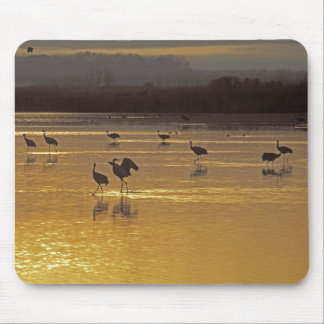 Sandhill Cranes Grus canadensis) Bosque Del Mouse Mat