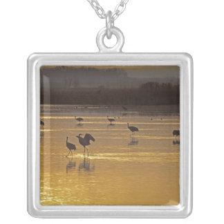 Sandhill Cranes Grus canadensis) Bosque Del Silver Plated Necklace