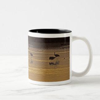 Sandhill Cranes Grus canadensis) Bosque Del Two-Tone Coffee Mug