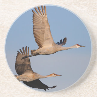 sandhill cranes in flight drink coasters