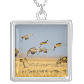 Sandhill cranes land in corn fields silver plated necklace