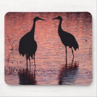 Sandhill cranes mousepads