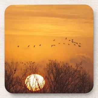 Sandhill cranes silhouetted aginst rising sun coaster