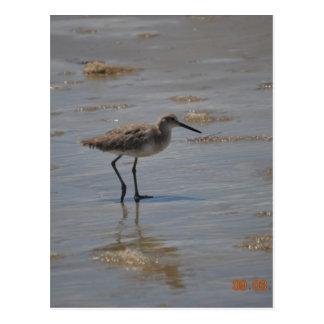 Sandpiper on Beach Postcard
