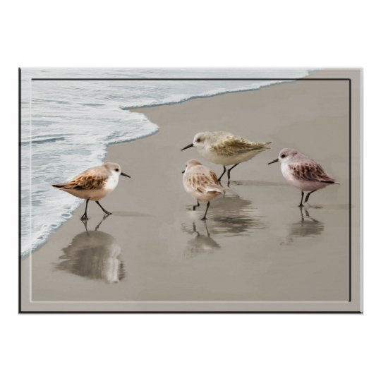 Sandpipers at the Shoreline Poster