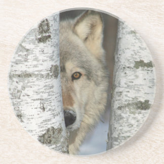 sandstone coaster with pic of wolf in birch trees