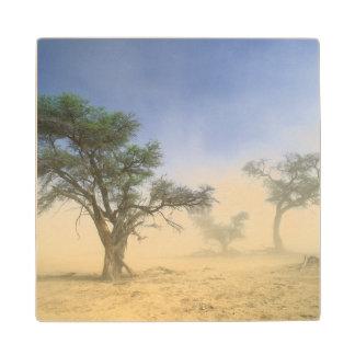 Sandstorm In Kalahari Desert, Kgalagadi Wood Coaster