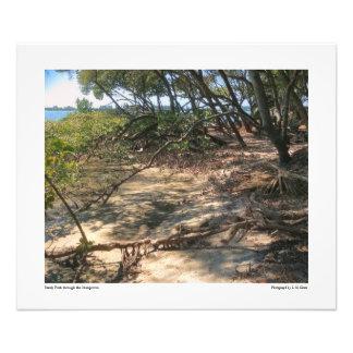 Sandy Path through the Mangroves Photo Print
