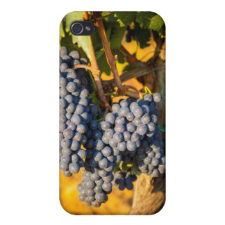 Sangiovese grapes in a vineyard iPhone 4 covers