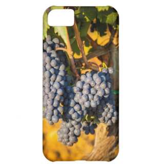 Sangiovese grapes in a vineyard iPhone 5C case