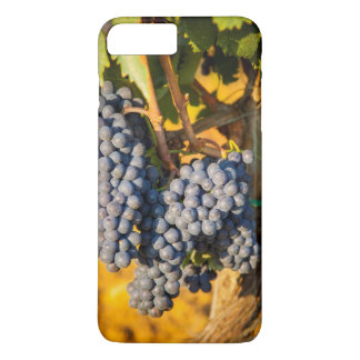 Sangiovese grapes in a vineyard iPhone 8 plus/7 plus case