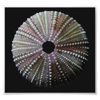 Sanibel Sea Urchin Photographic Print