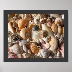 Sanibel Seashell Collection Poster