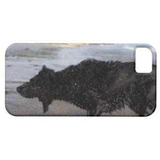 Santa Barbara, California, USA Barely There iPhone 5 Case