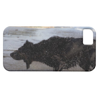 Santa Barbara, California, USA iPhone 5 Case