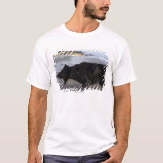 Santa Barbara, California, USA T-Shirt