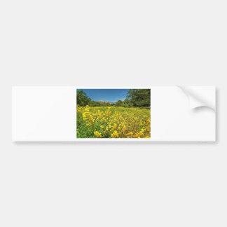 Santa Barbara Wildflowers Bumper Stickers