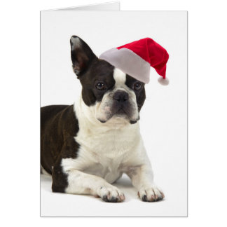 Santa Boston Terrier Christmas Card