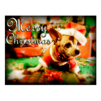 Santa Clause Chihuahua Merry Christmas Post Cards