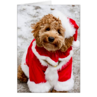 Santa Cockapoo Christmas Card
