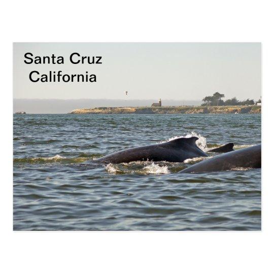 Santa Cruz, CA Humpbacks at Lighthouse Postcard