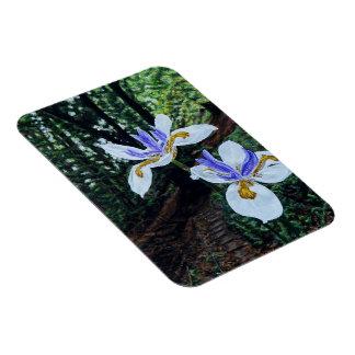 Santa Cruz Irises Magnet