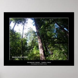 """""""Santa Cruz Redwoods"""" Print"""
