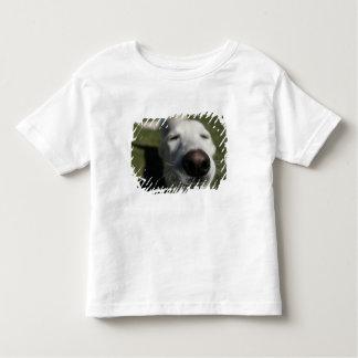 Santa Fe, New Mexico, USA. Happy white Toddler T-Shirt