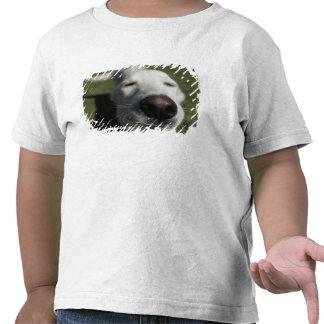 Santa Fe, New Mexico, USA. Happy white Tshirt