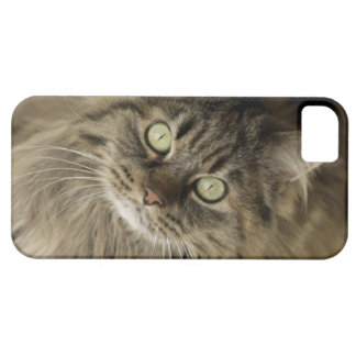 Santa Fe, New Mexico, USA. Maine coon cat. (PR) iPhone 5 Cases
