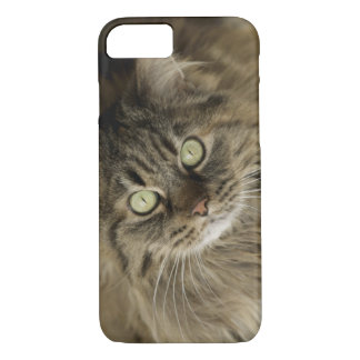 Santa Fe, New Mexico, USA. Maine coon cat. (PR) iPhone 8/7 Case
