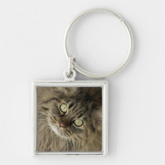 Santa Fe, New Mexico, USA. Maine coon cat. (PR) Silver-Colored Square Key Ring