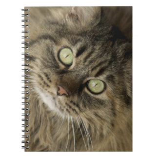 Santa Fe, New Mexico, USA. Maine coon cat. (PR) Spiral Note Books