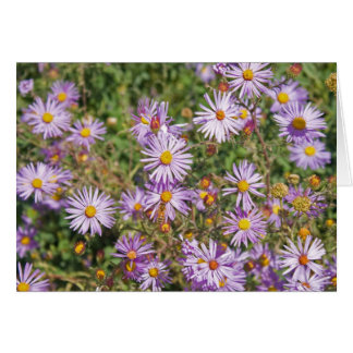 Santa Fe Wild Asters Card