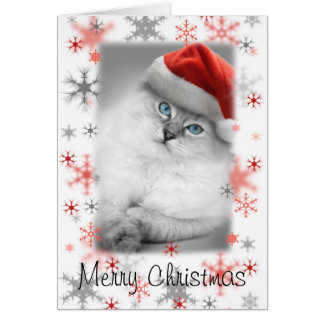 santa kitty christmas card