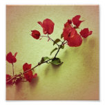 Santa Rita Flower in Warm Colours Wall Photo