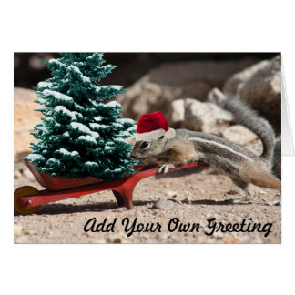 Santa Squirrel Elf Christmas Card